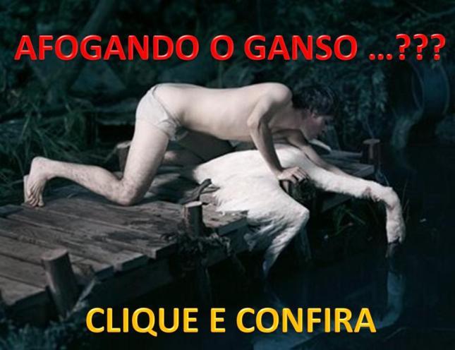 AFOGANDO O GANSO